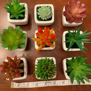 Other - Nine succulent plants in white ceramic pot
